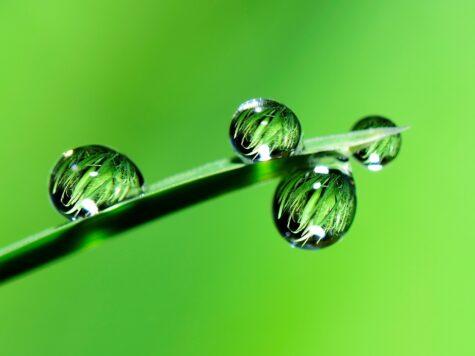 Groene Twinkeling: welk bedrijf verdient de groenste prijs voor ondernemend Overijssel?